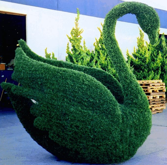 Topiary Swan-hubby said no :-(