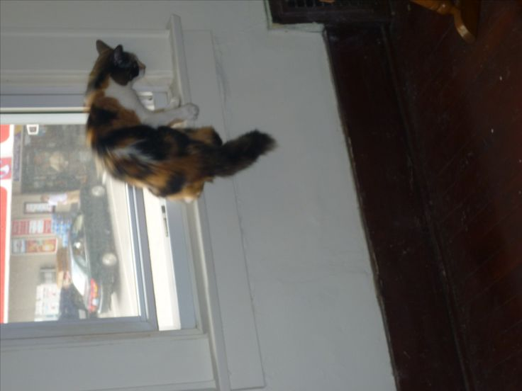 Marvelous Osiris Hopping Off Of A Windowsill, Birdwatching Successfully ... Stop Your  Cats From