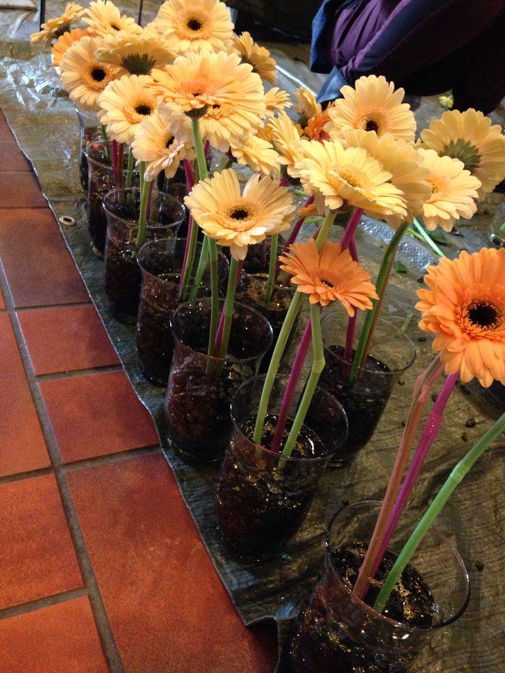 Blomster til doctor progtor premiun