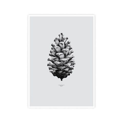 Pine Cone print print