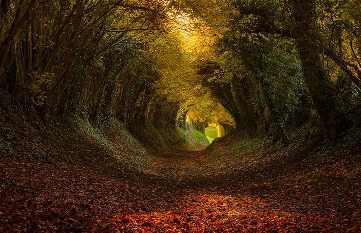 A holloway is a sunken path; a route that centuries of footfall, hoof-hit, wheel-roll and rain-rush have harrowed down into the bedrock.