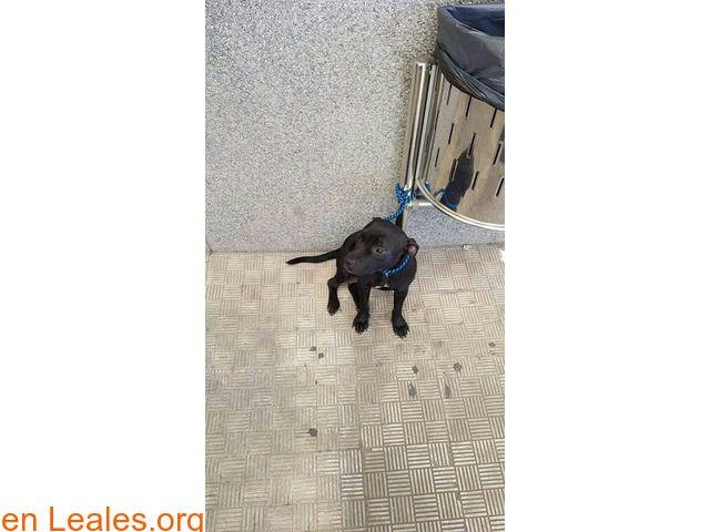 Perros encontrados  España  Las Palmas - Gran Canaria  Las Palmas G.C. February 27 2018 at 11:01PM   GRAN CANARIA  #PERDIDO #ENCONTRADO  Contacto y Info: https://leales.org/perdidos-o-encontrados/perros-encontrados_1/gran-canaria_i3502 #Difunde en #LealesOrg un #adopta y sé #acogida para #AdoptaNoCompres O un #SeBusca de #perro o #gatos ℹ Nos avisan de que han encontrado a este pequeño por la zona de San Cristóbal no se sabe aún si tiene chip o no. Quien lo ha encontrado ya está en contacto…