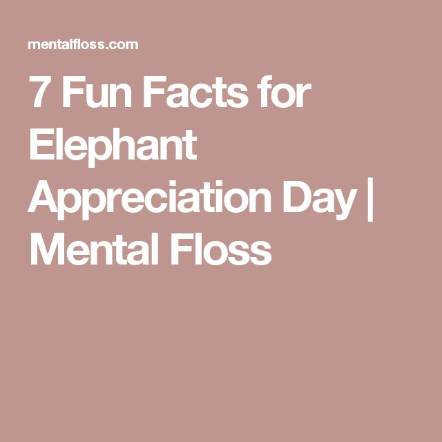 7 Fun Facts for Elephant Appreciation Day | Mental Floss