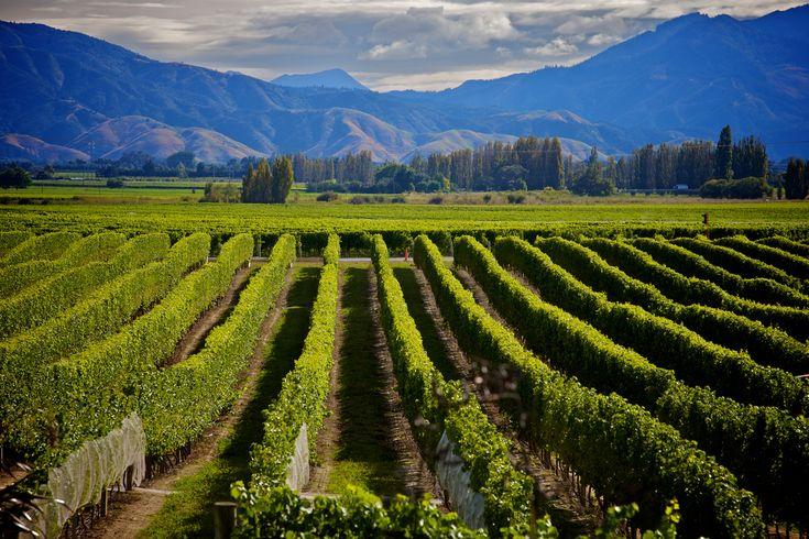 New Zealand eyes premium low alcohol wine sector  https://www.thedrinksbusiness.com/2018/01/new-zealand-eyes-premium-low-alcohol-wine-sector/