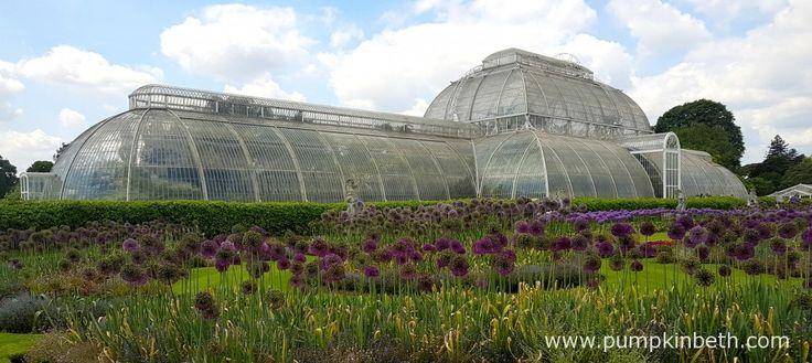 Super Surrey Spring Gardens - Pumpkin Beth
