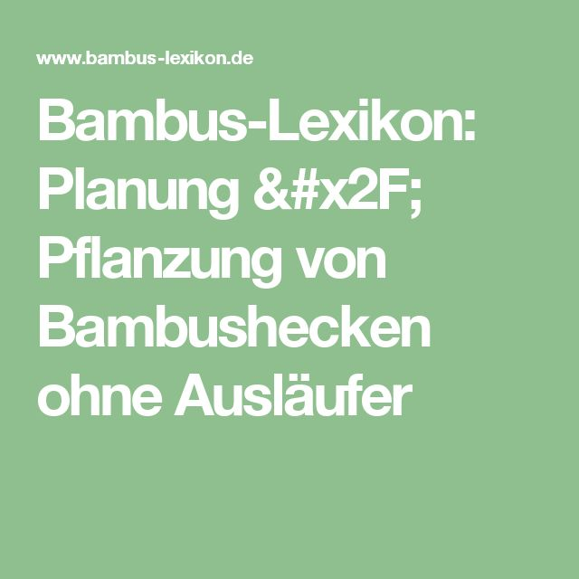 Bambus-Lexikon: Planung / Pflanzung von Bambushecken ohne Ausläufer