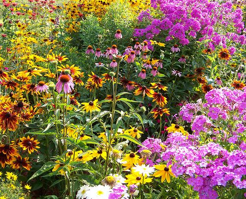21 Best Images About Wildflower Inspiration For The Home
