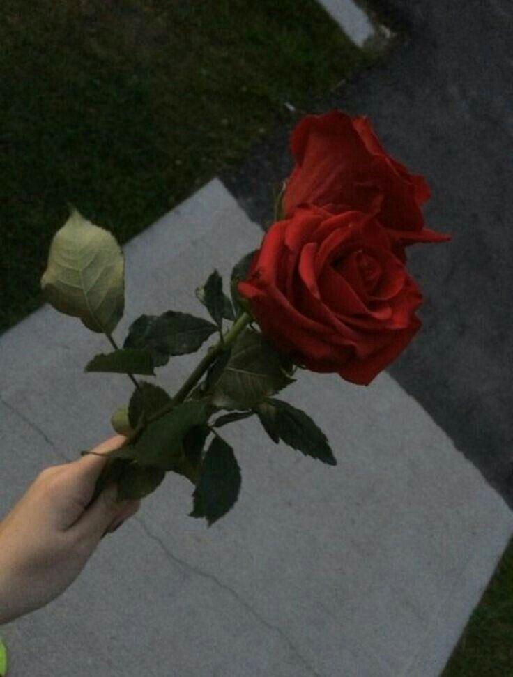 Mikucasco Aesthetic Pinterest Aesthetic Roses Rose Tumblr