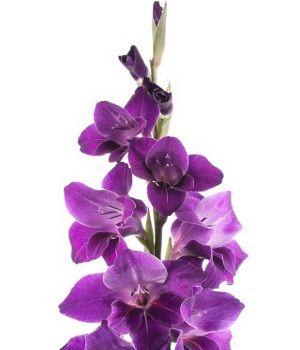 The 25 Best Purple Flowers Names Ideas On Pinterest
