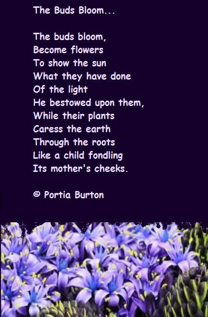 The Buds Bloom - © Portia Burton