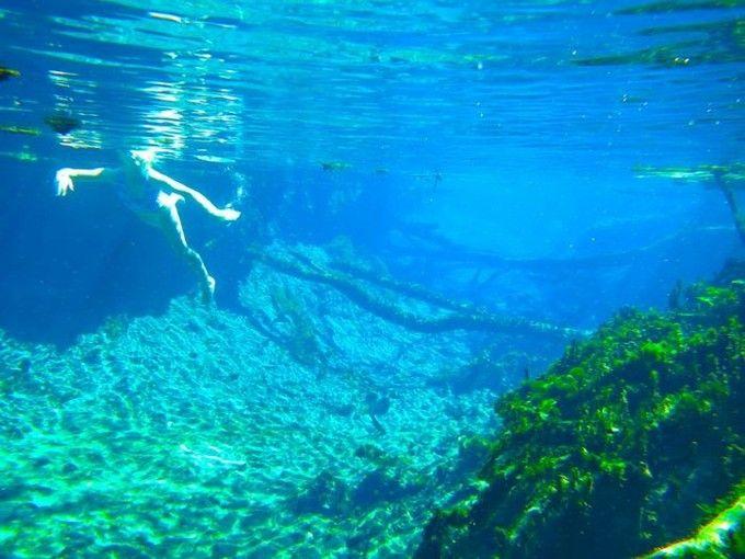 ジャングルの秘湯「マタランカ温泉」で魚や動物と一緒に温泉に? | RETRIP