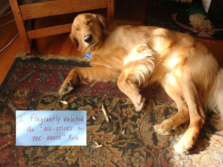 dog-shaming.com