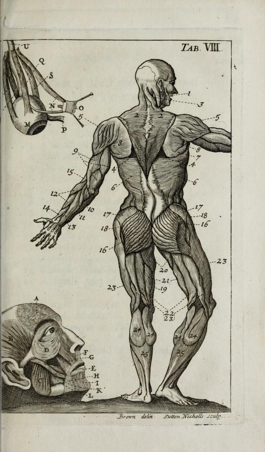 1036 Best The Body Emblazoned Images On Pinterest Human Anatomy