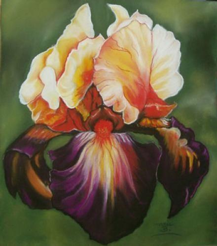 Les 25 meilleures id es de la cat gorie fleurs d 39 iris sur pinterest fleurs incroyables iris - Langage des fleurs iris ...