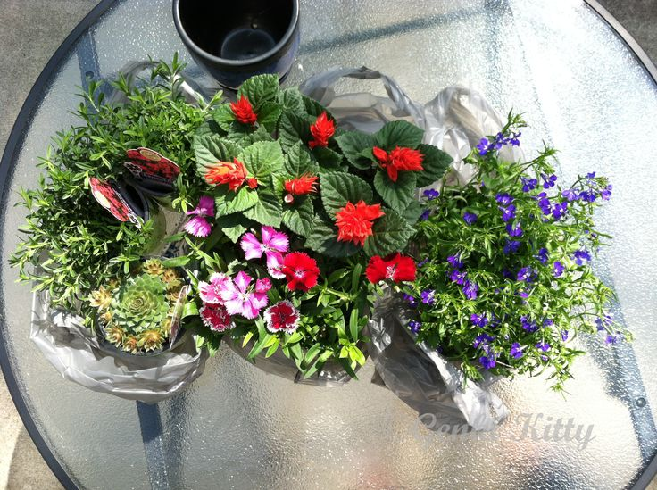 Flowers for spring 2015