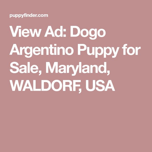 View Ad: Dogo Argentino Puppy for Sale, Maryland, WALDORF, USA