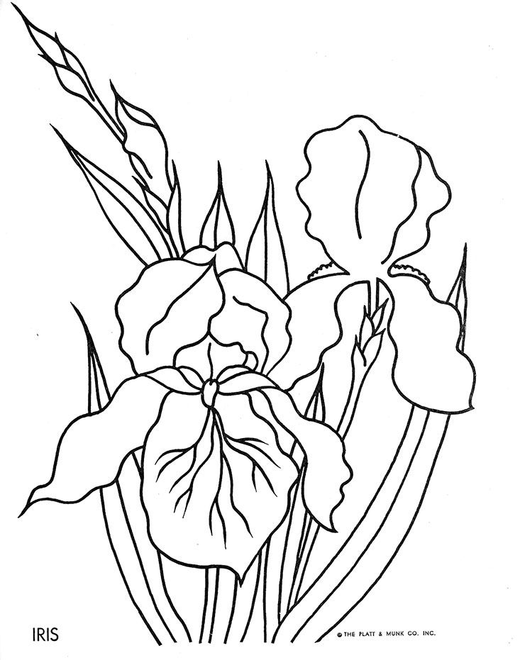 17 best images about coloring for adults on pinterest for Iris flower coloring page
