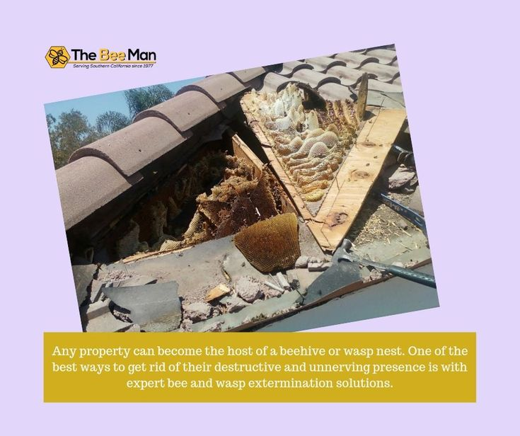 Any property can the host of a beehive or wasp nest