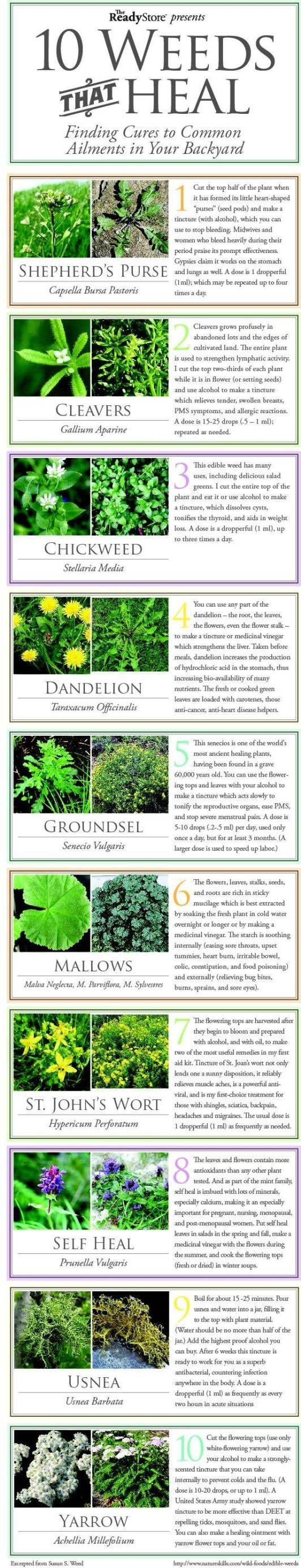 Top 10 Weeds That Heal