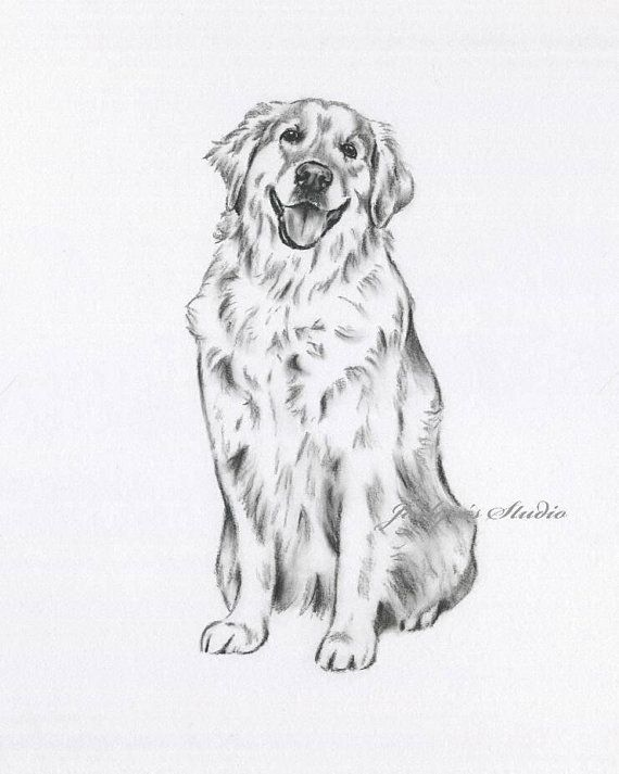 Golden Retriever Art Print Retriever Drawing Retriever Sketch