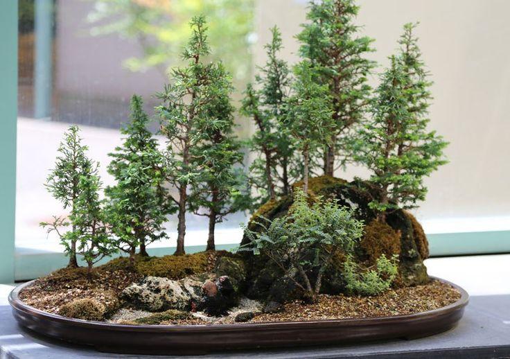 miniature bonsai forests 3 15 Beautiful Bonsai Forests