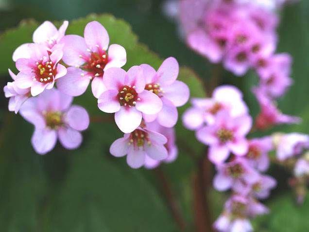 Flowering House Plants best 25+ indoor flowers ideas on pinterest | indoor flowering