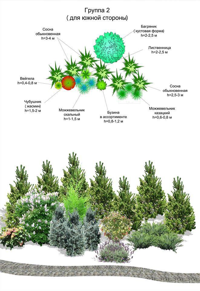 95 besten b ume und str ucher bilder auf pinterest for Pflanzengestaltung garten