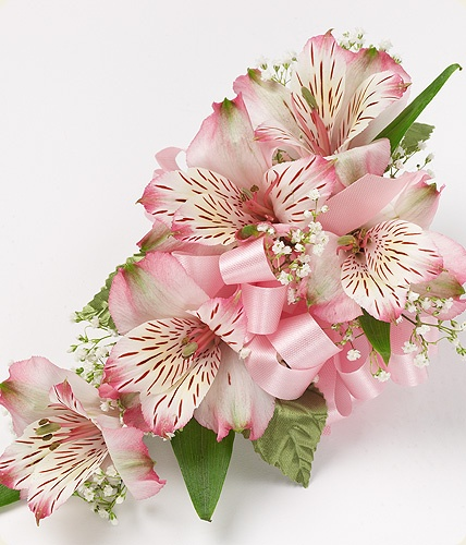 A beautiful all alstroemeria corsage. Alstroemeria comes in a wide range of colors and is also known as the peruvian lily!