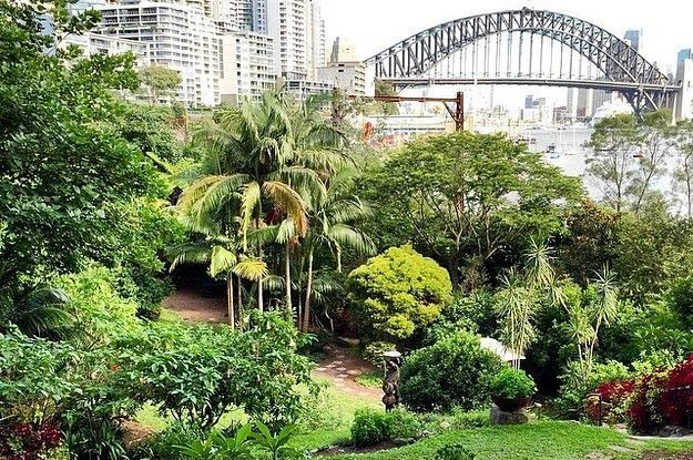 'Wendy's Secret Garden' Lavender Bay: A lesser known, but amazing Sydney Harbour garden with idyllic views