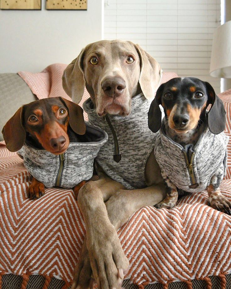 'Sweater Weather' - Indiana, Harlow & Reese ready for Walkies