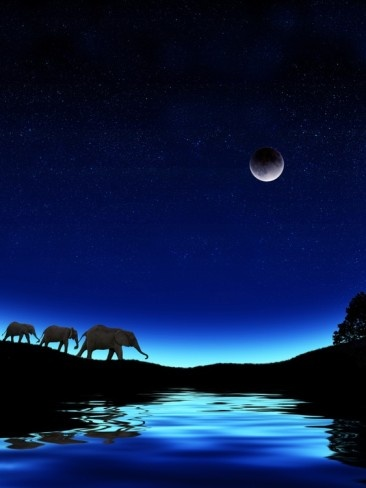 Three Elephants Walking Past Water Photographic Print by Mike Agliolo at AllPosters.com