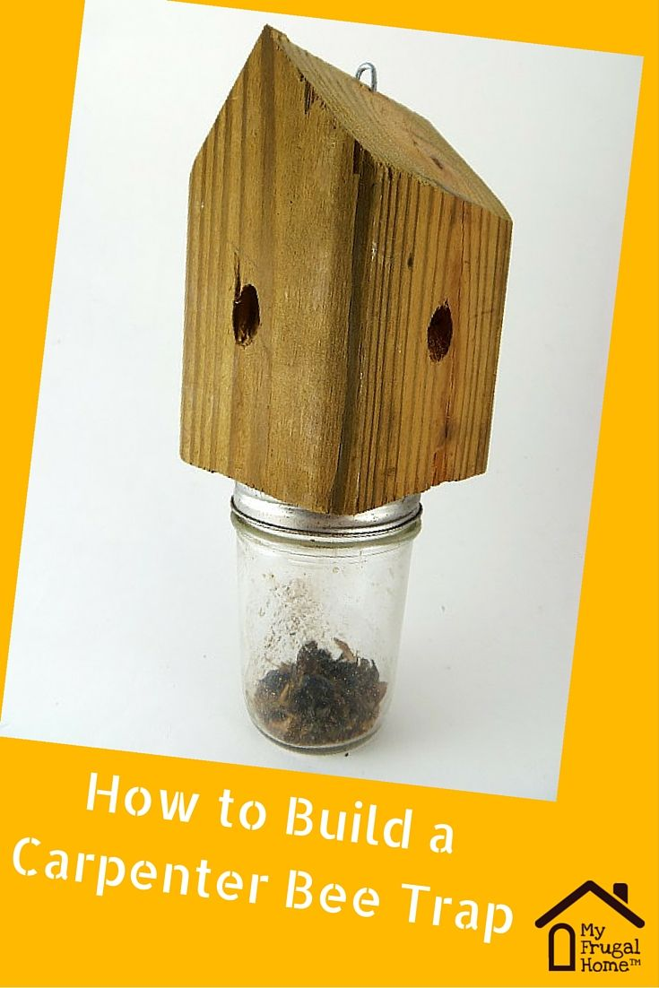 17 Best Images About Frugal Pest Control On Pinterest