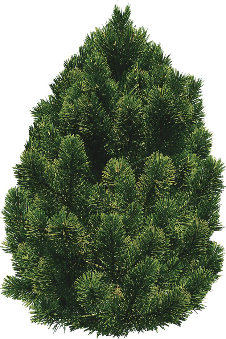 34 best images about staffage on pinterest 2d pine and for Small bushy trees