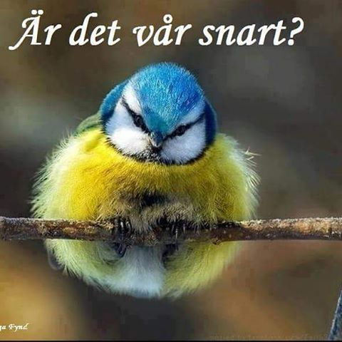 Ja, det får man fråga sig😄God morgon på er☕🍃Solen skiner☀Idag torsdag, städning! Ha en fin torsdag✨☀ #vår #mars #sol #torsdag
