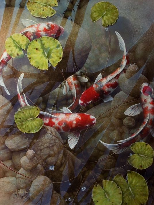 120 best images about amazing koi artwork by terry gilecki for Amazing koi ponds