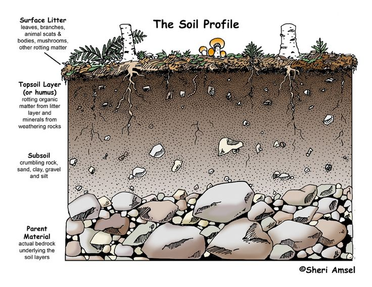 138 best aqa a2 biology unit 4 images on pinterest ap for Natural resources soil uses