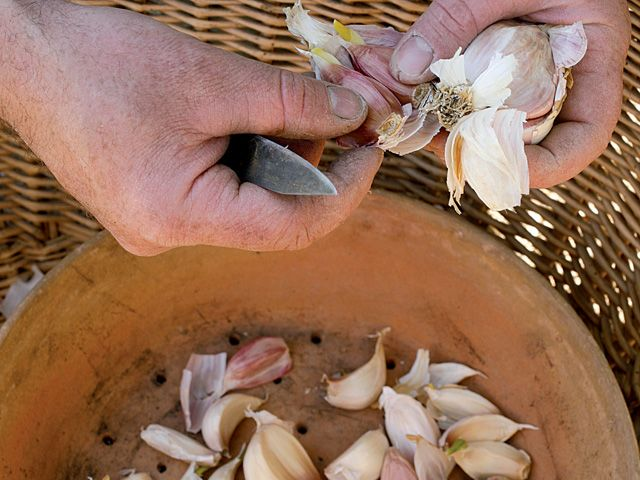 1000 id es sur le th me lutter contre les pucerons sur pinterest puceron anti puceron et limace - Produit naturel contre les pucerons ...