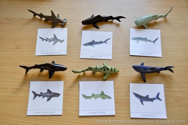 17 Best images about Sea animal craft on Pinterest | Paper sculptures ...