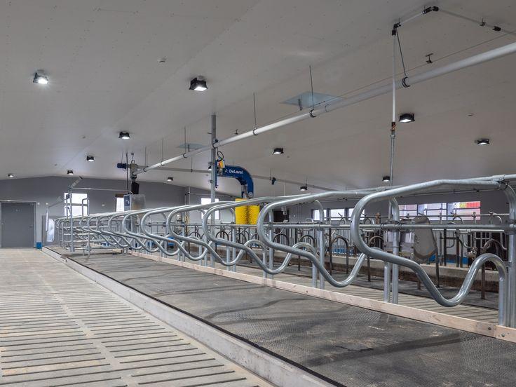 Renovated barn with new LED-lights. Good lighting for better working conditions, ecological production and animal welfare. Uusittu navetta, jossa on uudet LED-valaisimet. Hyvä valaistus vaikuttaa parempiin työolosuhteisiin, ekologiseen tuotantoon sekä eläinten hyvinvointiin.