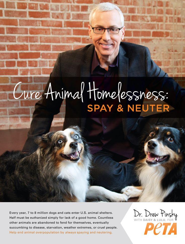 Dr Drew: Drew Pinski, Drew Cure, Animal Homeless, Peta Spay Neuter, Companion Pet, Drew Spay, Peta Dr. Drew, Spay And Neuter, Homeless Pet