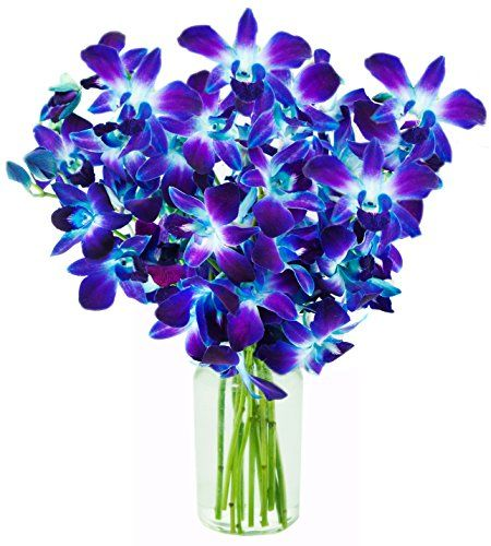 Kabloom 10 Stems Blue Valentine Dendrobium Orchids…