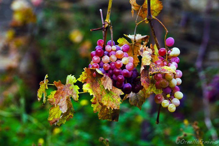 ...i colori dell'autunno - null