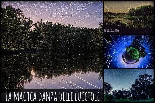 La magica danza delle lucciole nelle foto di Vincent Brady