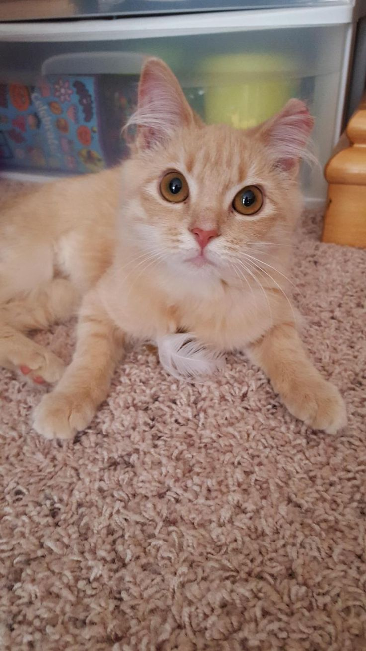 58 best Adoptable Kitties images on Pinterest