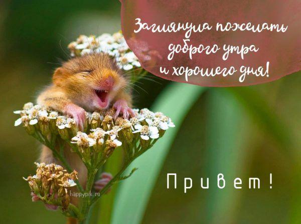 Dobroe Utro Krasivye Kartinki S Izobrazheniyami Smeshnye