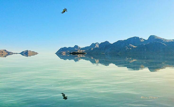 #havørn og #hav så langt øye kan se.  #eagle #seascape #northnorway #natur #nordnorge #EirinTeigen #mittnordnorge #ig_nordnorge #northernnorway2day #purenaturepictures #norgebilderno #norwayworld #norsketurbilder #thebestofnorway #brilliantnorway #visitnorway #earthpix #awesomenorwegians #earthfocus #OurPlanetDaily #northernnorway #norway