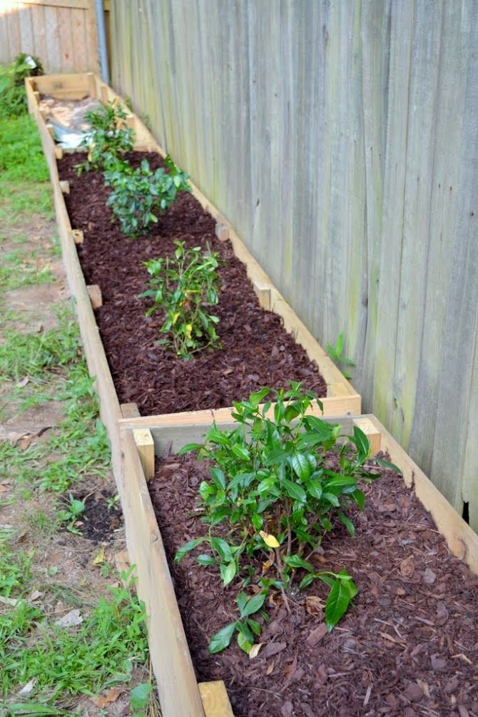 Landscaping Ideas To Hide Ugly Fence : Great way to hide your neighbor s ugly fence