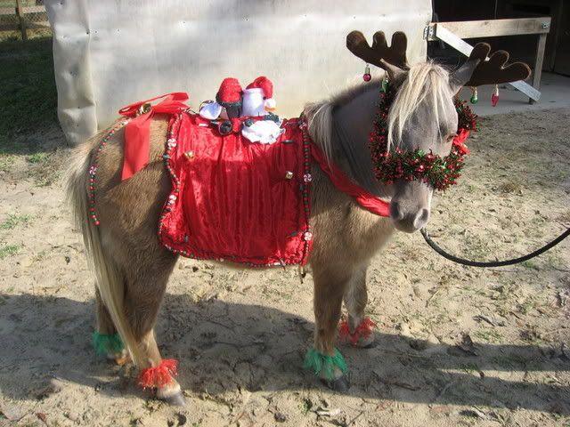 Christmas Horse Parade Holiday Costumes Miniature Forum Lil Beginnings Mini Horses
