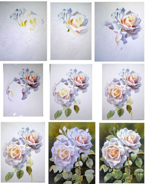 ルネッサンスローズ水彩で色の白アプリコットをペイントする方法