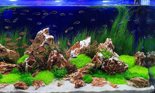 How To Keep Your Aquarium Crystal Clear Aquarium Tidings In 2020 Aquarium Freshwater Aquarium Tropical Freshwater Fish